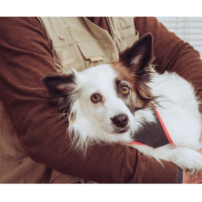 Gyvūnai – ne tik draugai, bet ir gydytojai