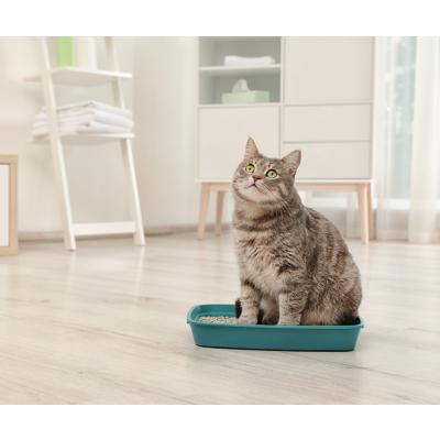 Kaip išsirinkti kačių kraiką?
