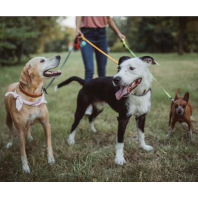 Gyvūnų auklės – vis labiau populiarėjanti paslauga