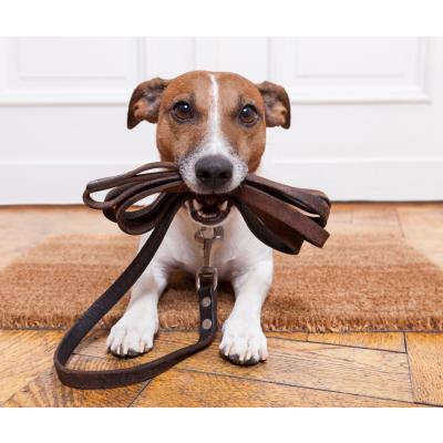 Kodėl šunų dresūra yra būtina?